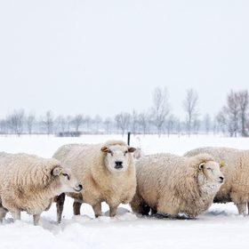 Pure laine écologique française naturelle écrue